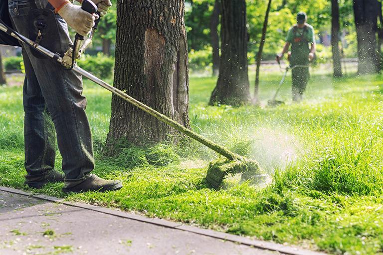 pielęgnowanie zielenii